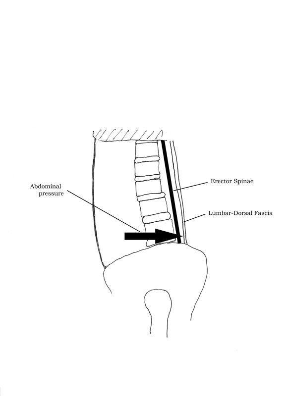 Displacement of Lumbar-Dorsal Fascia by Abdominal Pressure