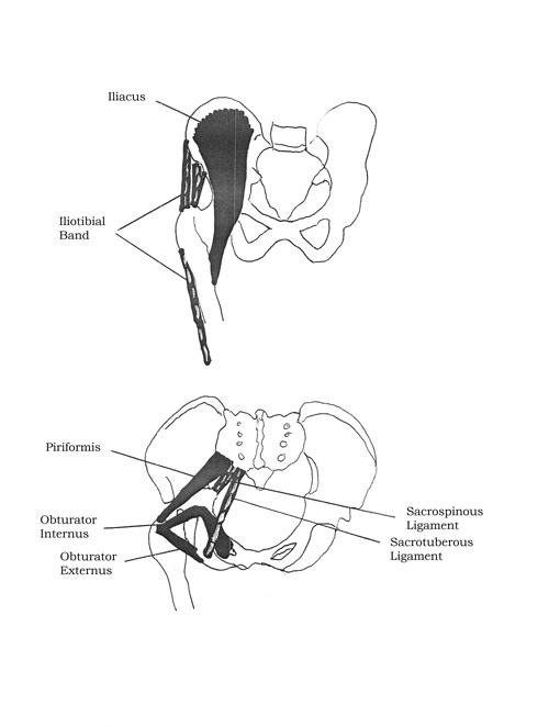 Ilio-Tibial Tract/Iliacus