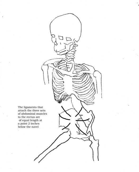 attachments of the abdominals three-quarter side view