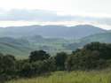 Oaks and hills, Helen Putnam Regional Park