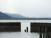 Pilings, Clear Lake