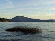 Clear Lake reeds, Konocti